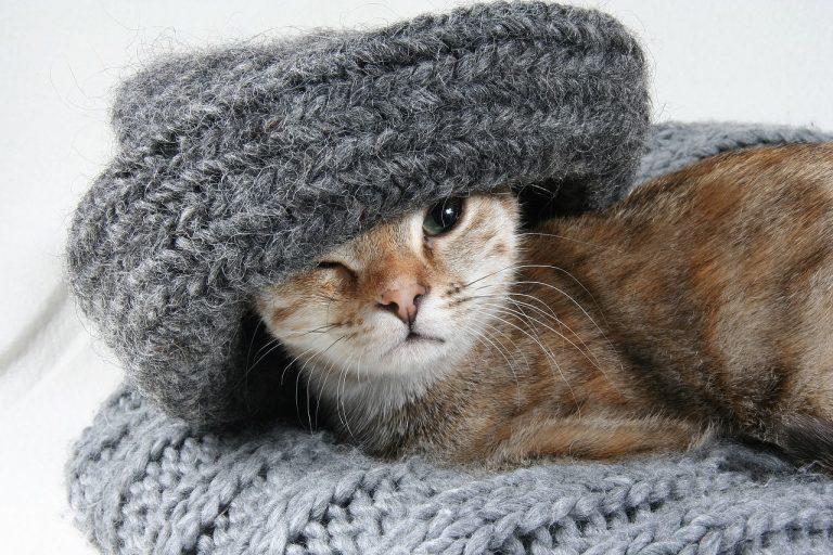 Femeia nebună cu pisici stereotip pisica pisici cat